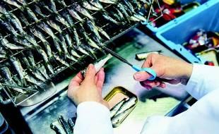 Les sardines sont emboîtées dans l'usine La Belle-Iloise à Quiberon.