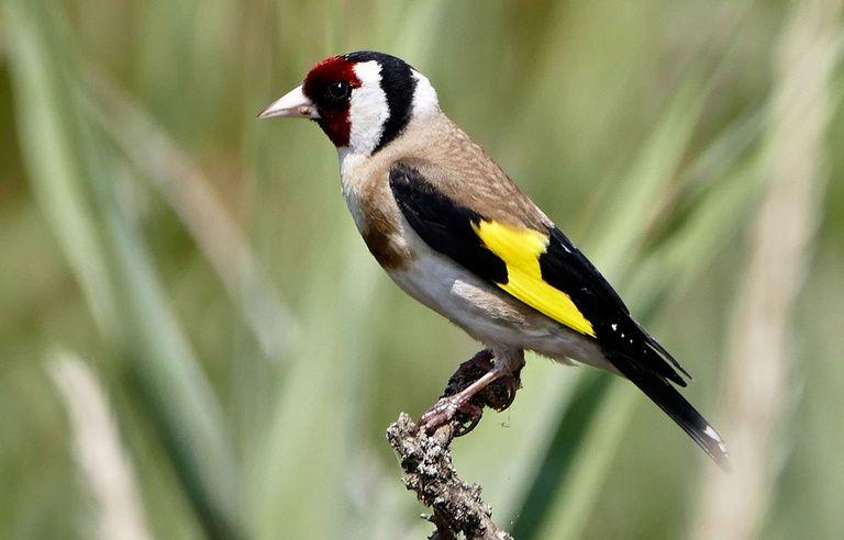 Hauts De France Le Trafic D Oiseaux Proteges Est Particulierement Actif Dans La Region