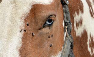 Un cheval (illustration)