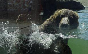 Un ours se baigne dans son enclos au zoo d'Oakland (Californie) en juillet 2020.