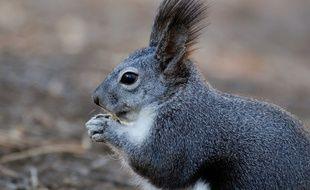 Un écureuil. Image d'illustration.