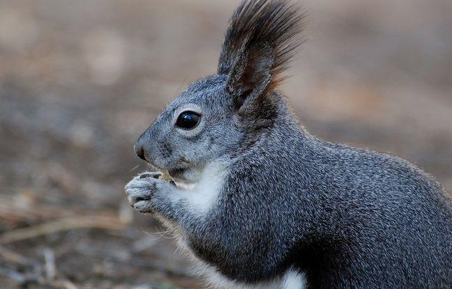 Etats-Unis: Il droguait son écureuil avec de la meth pour en faire un animal d'attaque