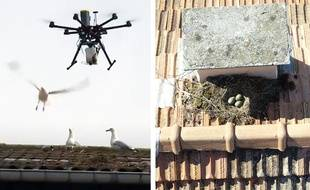Des drones viennent asperger les œufs d'huile pour empêcher leur éclosion