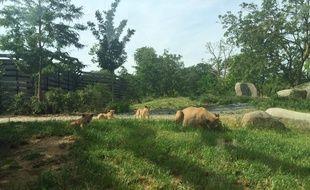 Les trois petits lionceaux ne lâchent pas leur maman.