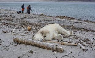 Un ours polaire a été abattu en Norvège après avoir blessé un homme