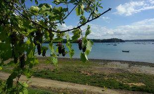 Les pieds de vigne seront plantés sur les bords de la Rance à Saint-Jouan-des-Guérets.