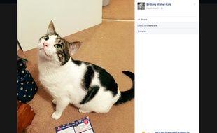 Capture d'écran d'un post Facebook de Brittany Maher-Kirk, montrant son chat Ted et l'avis de passage du facteur à son nom.