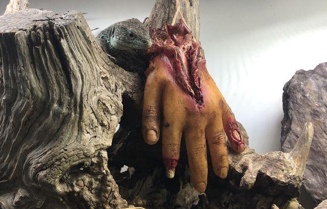 Ambiance Halloween au micro zoo de Saint-Malo pour les vacances de la Toussaint.
