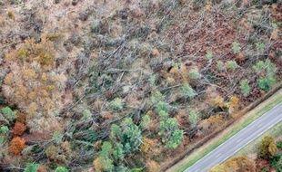 Les ravages de la tempête Klaus du 24 janvier 2009 dans la forêt des Landes.