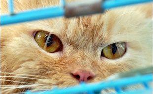 La Société protectrice des animaux (SPA) et la Ligue pour la protection des oiseaux (LPO) craignent que la peur de la grippe aviaire provoque des réactions excessives contre les chats et les oiseaux à l'instar de ce qui se passe en Allemagne.