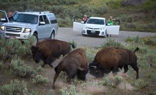 Des bisons (illustration).