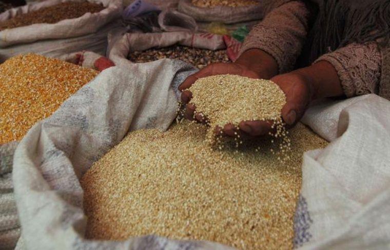 Récolte de quinoa en Bolivie.