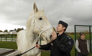 Les chevaux de la brigade équestre de Lille font connaissance avec leurs nouveaux cavaliers.