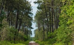 Illustration d'une forêt.