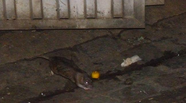 Les rats ont pris leur aise au 11 rue Dumas depuis plusieurs mois. – F. Pouliquen / 20 Minutes