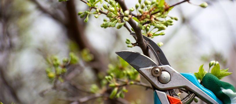 Si l'arbre de votre voisin empiète sur votre propriété, vous pouvez lui demander de couper les branches.
