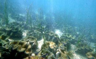 """Ainsi les floraisons de phytoplancton fertilisé au sulfate de fer """"peuvent séquestrer du carbone sur des échelles de temps calculées en siècles dans les couches d'eau juste au-dessus des fonds marins et même pendant plus longtemps dans les sédiments à ces profondeurs"""", ont-ils ajouté."""