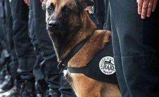 Le chien du Raid Diesel, mort le 18 novembre 2015 lors d'un assaut antiterroriste à Saint-Denis.