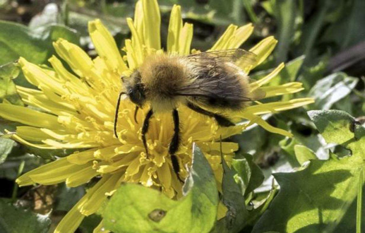 L'Assemblée vote l'interdiction des néonicotinoïdes, réputés toxiques notamment pour les abeilles, en 2016 – Denis Charlet AFP