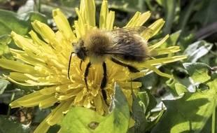 L'Assemblée vote l'interdiction des néonicotinoïdes, réputés toxiques notamment pour les abeilles, en 2016
