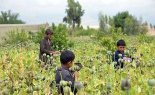La production mondiale d'opium a bondi de 65% de 2016 à 2017, à 10.500 tonnes. L'Afghanistan se taille la part du lion avec une production de 9.000 tonnes, soit 87% de plus qu'en 2016.