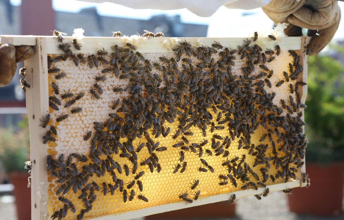 Des ruches en ville. Illustration. – G. Varela \ 20 Minutes