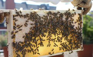 Des ruches en ville. Illustration.