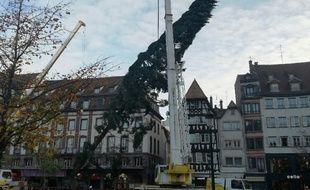 VIDEO. Strasbourg: Le grand sapin du marché de Noël est arrivé.