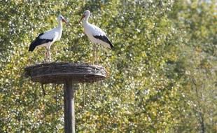 Des cigognes ont élu domicile dans le Comminges au sud de la Haute-Garonne.