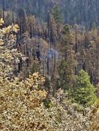 Un sequoia se consume encore 9 mois après les incendies qui ont ravagé la Californie.