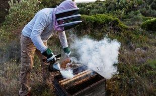 Un apiculteur, dans l'Hérault (illustration)