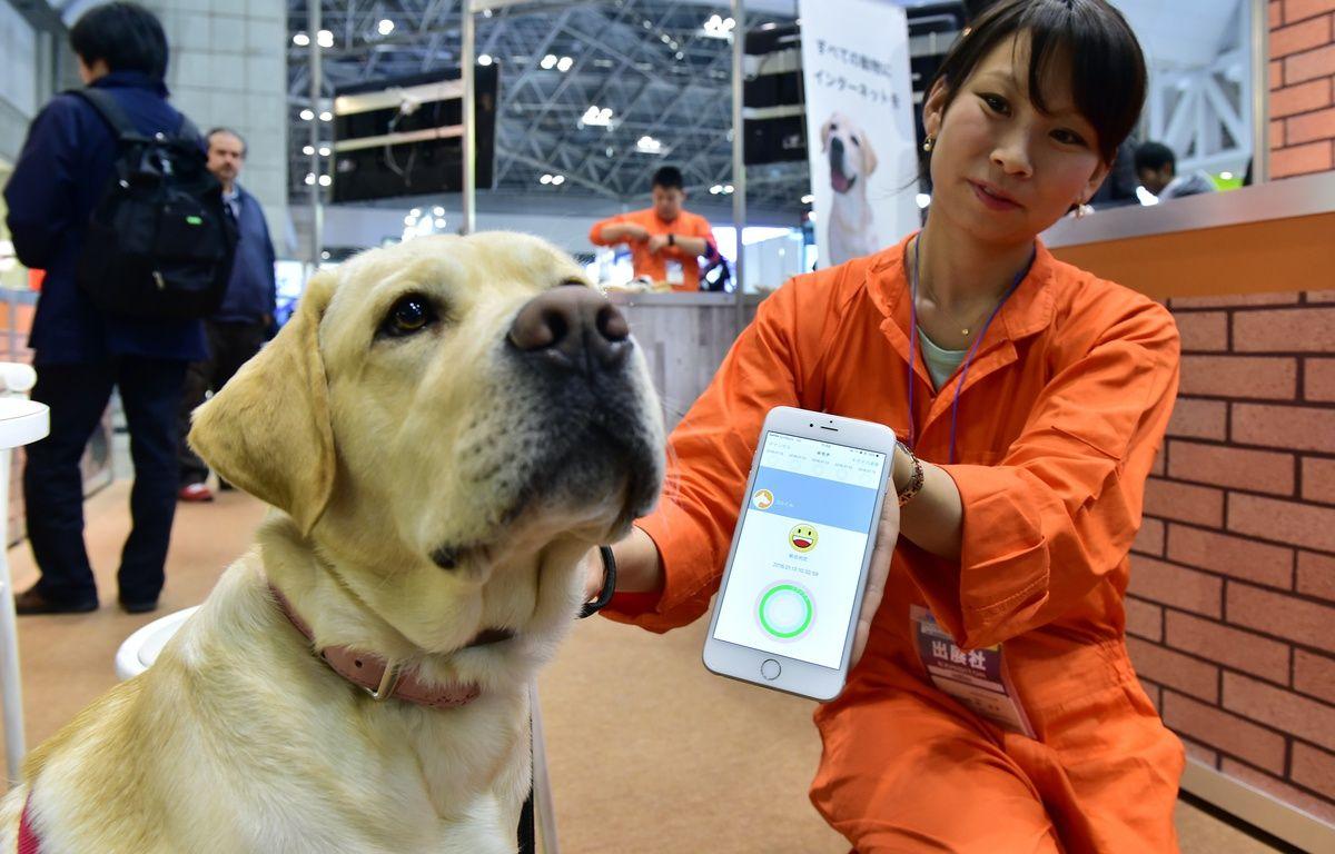 Un chien porte un appareil équipé de capteurs de la société japonaise Anicall censé analyser ses émotions, à Tokyo, le 13 janvier 2016. – YOSHIKAZU TSUNO / AFP