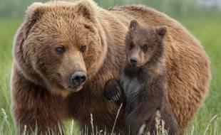 Un grizzli et son petit aperçus dans le documentaire