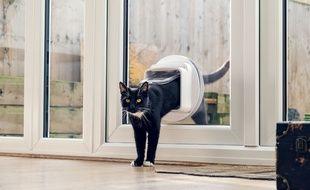 A chaque passage du chat, la chatière Connect alerte son maître.