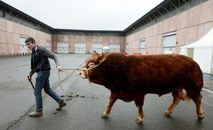 Un éleveur mène un taureau au Mondial des fournisseurs de l'Agriculture et de l'Élevage (SIMA), à Villepinte (Seine-saint-Denis), qui fait partie du salon de l'Agriculture de Paris, le 24 février 2013
