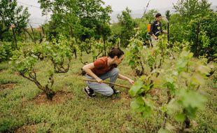 La nouvelle génération de viticulteurs, plus alerte sur les enjeux environnementaux, participe activement à la diffusion de pratiques vertueuses.