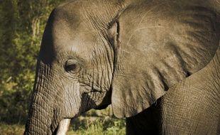 L'éléphant est resté prisonnier du puits pendant trois jours.