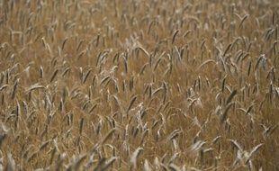 L'envolée des cours des matières premières agricoles s'est répercutée en juillet sur les prix alimentaires mondiaux qui ont grimpé de 6%, selon les chiffres de la FAO, alors que la sécheresse sévit dans les principaux pays producteurs.