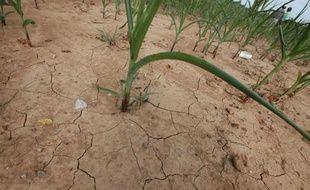 """Le président de la Banque mondiale (BM) s'est inquiété lundi de la récente flambée de certains prix alimentaires, sous l'effet notamment d'une vague de sécheresse aux Etats-Unis, et de ses """"conséquences néfastes"""" sur le sort des populations pauvres."""