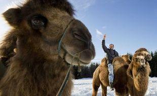 Un chameau en Suède.