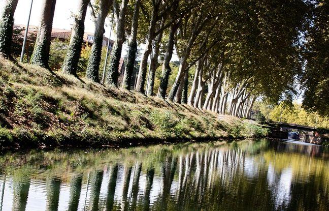 Toulouse: Les notes de Nougaro à la rescousse du Canal du Midi (et de sa voûte arborée)