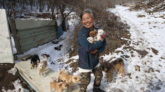 Depuis plus de 26 ans, cette Sud-Coréenne sauve et recueille des chiots errants ou destinés à être mangés dans des restaurants. – L.Jin-man/AP/SIPA