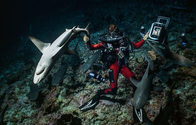L'équipe de Laurent Ballesta a équipé 40 requins de balises, et posé des caméras sur d'autres