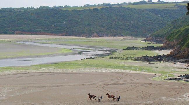 Bretagne : Les algues vertes soupçonnées après la mort de deux chiens qui couraient sur une plage