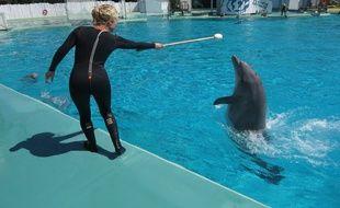A Port-Saint-Père, le 29 mai 2015, les dauphins du parc animalier Planete Sauvage.