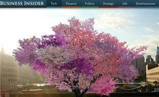 L'arbre aux quarante espèces différentes.
