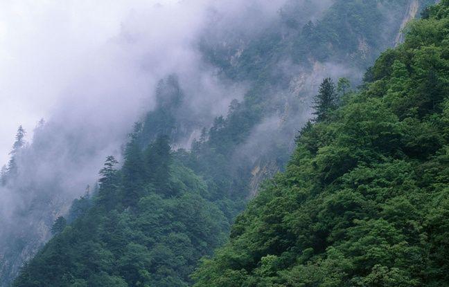 Les forêts du Sichuan, en Chine, habitat des derniers pandas en liberté.