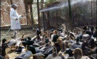Un premier cas humain de grippe aviaire H5N1 a été recensé à Djibouti, a annoncé jeudi le ministre djiboutien de la Santé, Abdallah Abdillahi Miguil. Après l'Egypte, où cinq personnes sont mortes de la grippe aviaire, Djibouti est le second pays africain où un cas humain de H5N1 est confirmé.