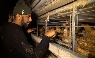 Le rappeur Stomy Bugsy a participé à la libération de poules dans un élevage en batterie.