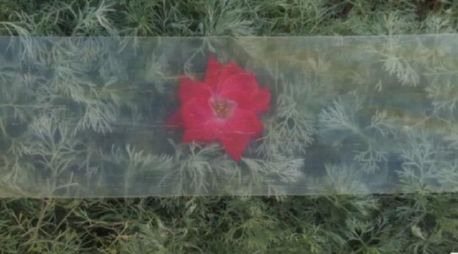 Des chercheurs mettent au point un bois transparent suffisamment solide pour remplacer le verre - 20 Minutes